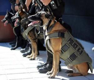 K9 Bullet Proof Vests / Body Armour